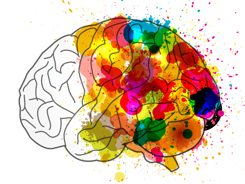Drawing of brain painted with watercolor